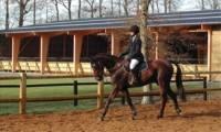 BPJEPS Activités Equestres