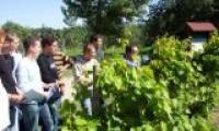 Bac Professionnel Viticulture Oenologie (CGEA)