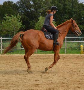 Bac pro cheval