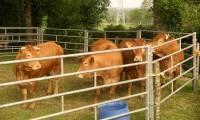 1ère Bac Pro CGEA et Terminale - dominante élevage