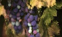 Bac Pro CGEA Vigne et Vin
