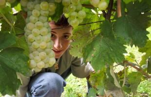 Viticulture - Œnologie