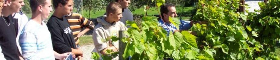 La viticulture