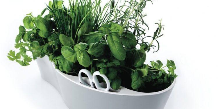 connaitre et cuisiner les plantes du bien tre les maisons familiales rurales de la charente. Black Bedroom Furniture Sets. Home Design Ideas