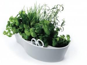 herb-garden-jardin-pour-plantes-aromatiques