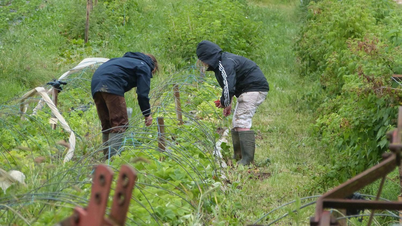 adema  acc u00e8s des demandeurs d u0026 39 emploi aux m u00e9tiers de l u0026 39 agriculture